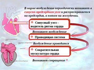 В норме возбуждение периодически возникает в синусно-предсердном узле и распр