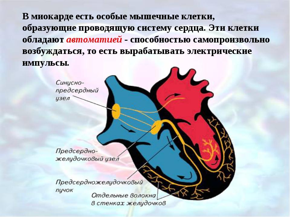 В миокарде есть особые мышечные клетки, образующие проводящую систему сердца....