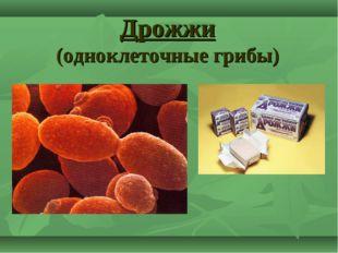 Дрожжи (одноклеточные грибы)