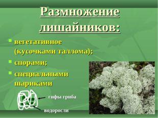 Размножение лишайников: вегетативное (кусочками таллома); спорами; специальны