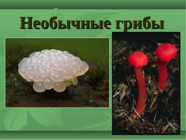 Необычные грибы