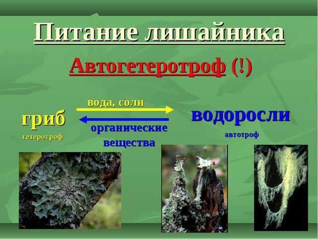 Питание лишайника Автогетеротроф (!) гриб водоросли вода, соли органические в...