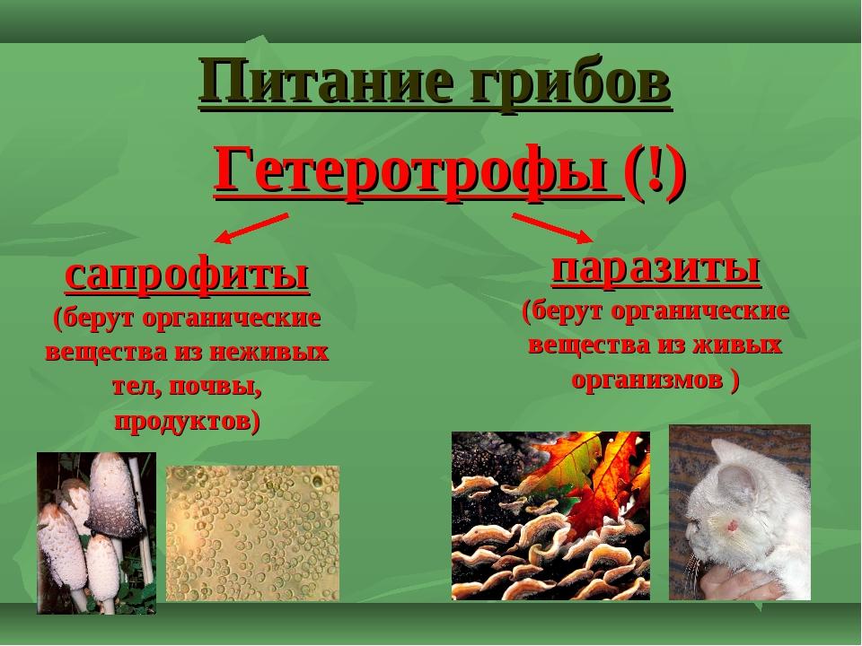 Питание грибов сапрофиты (берут органические вещества из неживых тел, почвы,...
