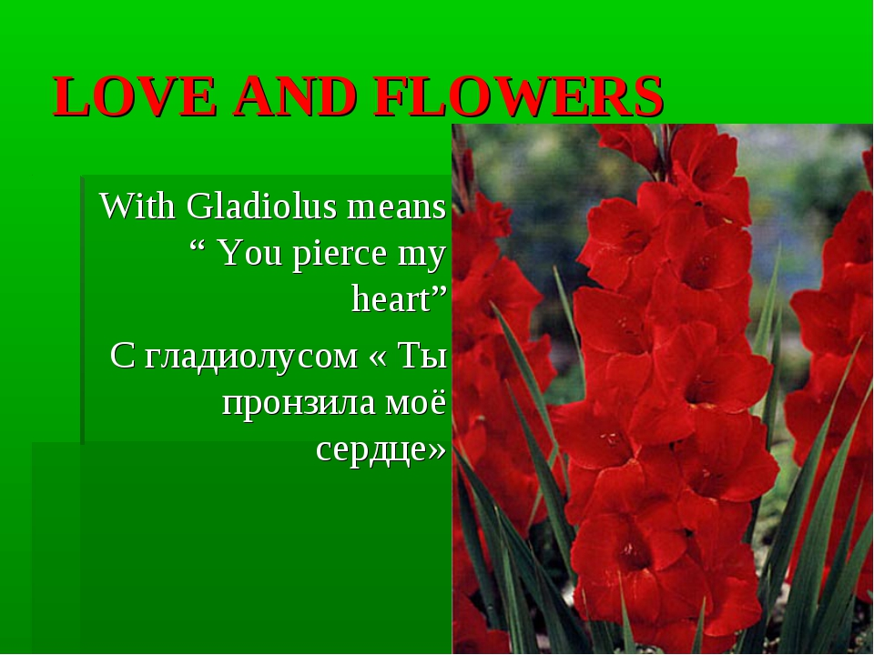 "LOVE AND FLOWERS With Gladiolus means "" You pierce my heart"" С гладиолусом «..."