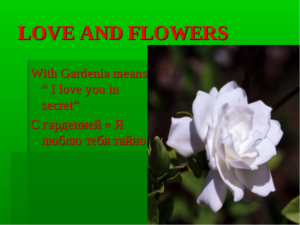 "LOVE AND FLOWERS With Gardenia means "" I love you in secret"" С гарденией « Я..."