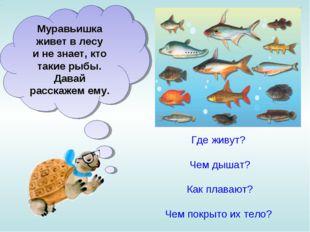 Муравьишка живет влесу инезнает, кто такие рыбы. Давай расскажем ему. Где