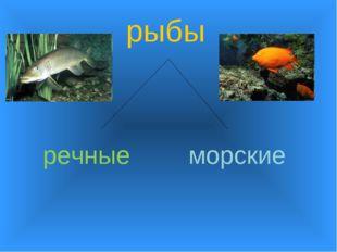 рыбы речные морские