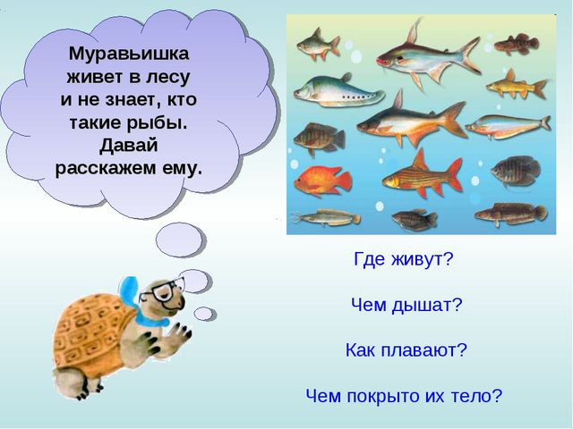 Муравьишка живет влесу инезнает, кто такие рыбы. Давай расскажем ему. Где...