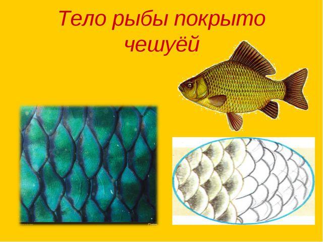 Тело рыбы покрыто чешуёй