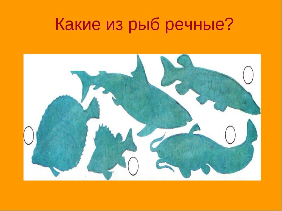 Какие из рыб речные?
