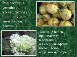 Род растения семейство крестоцветных одно-,дву или многолетние растения. Окол