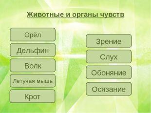 Животные и органы чувств Юматова Наталья Сергеевна, учитель информатики ГБОУ