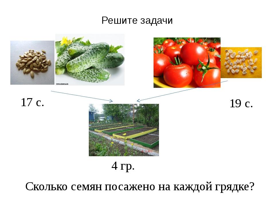 Решите задачи Сколько семян посажено на каждой грядке? 17 с. 19 с. 4 гр.