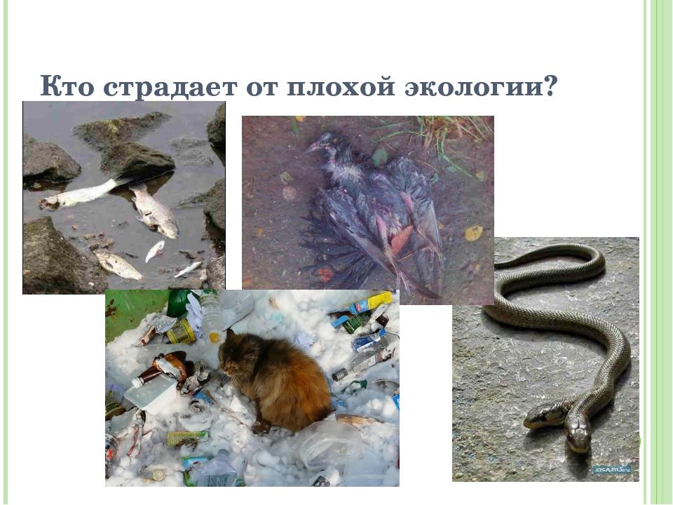 Кто страдает от плохой экологии?