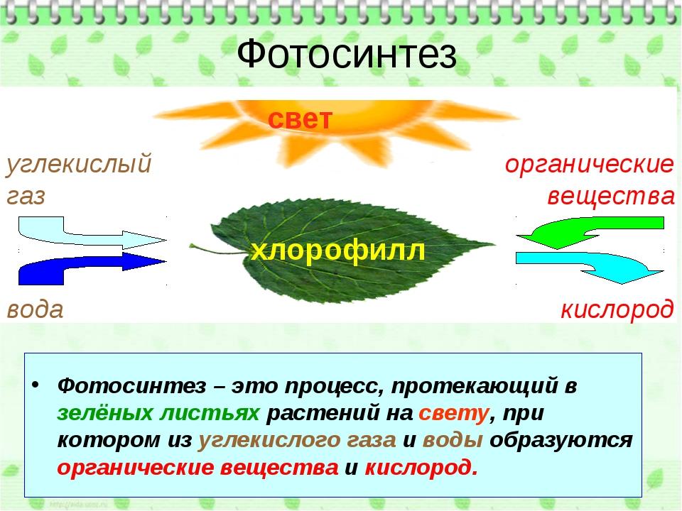 Фотосинтез – это процесс, протекающий в зелёных листьях растений на свету, п...