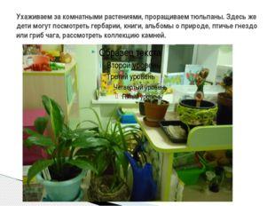 Ухаживаем за комнатными растениями, проращиваем тюльпаны. Здесь же дети могут