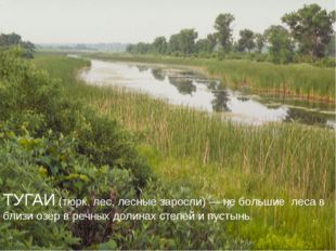 ТУГАИ (тюрк. лес, лесные заросли) — не большие леса в близи озёр в речных дол