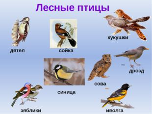 Лесные птицы дятел дрозд иволга зяблики сойка синица сова кукушки