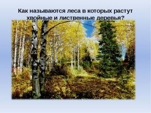 Как называются леса в которых растут хвойные и лиственные деревья?