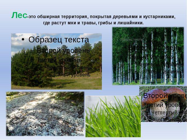 Лес-это обширная территория, покрытая деревьями и кустарниками, где растут мх...