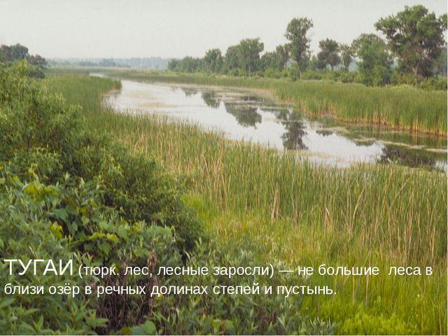 ТУГАИ (тюрк. лес, лесные заросли) — не большие леса в близи озёр в речных дол...