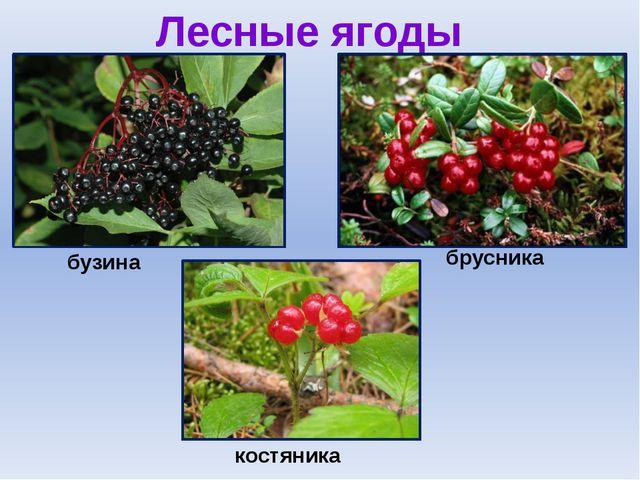 Лесные ягоды бузина брусника костяника