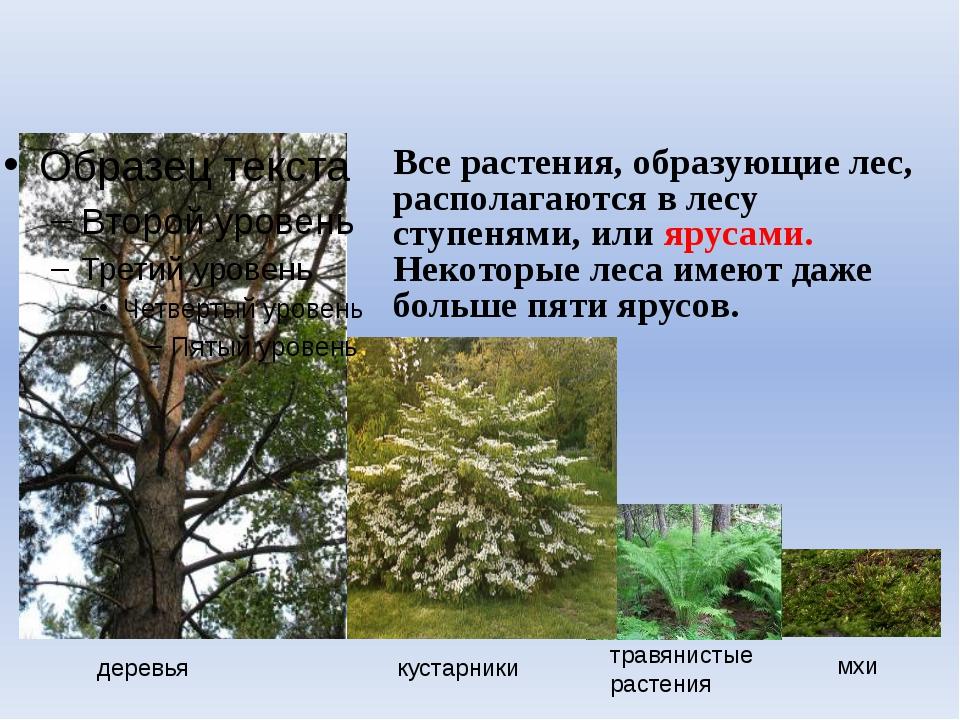 деревья кустарники травянистые растения мхи Все растения, образующие лес, ра...