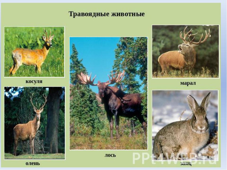 Название: составить рассказ о растении или животном из красной книги издательство: afterall books формат: rar язык
