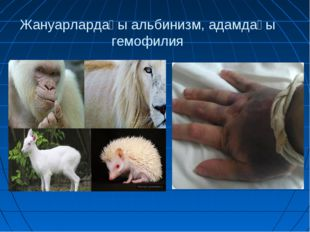 Жануарлардағы альбинизм, адамдағы гемофилия