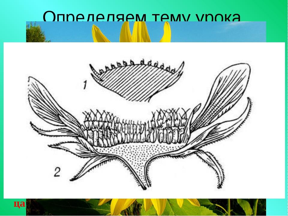 Определяем тему урока Восстановите систематический ряд этих растений: царство...
