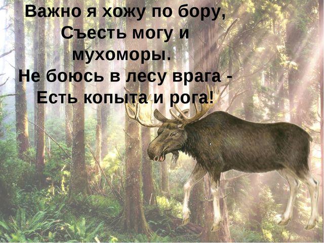 Важно я хожу по бору, Съесть могу и мухоморы. Не боюсь в лесу врага - Есть ко...