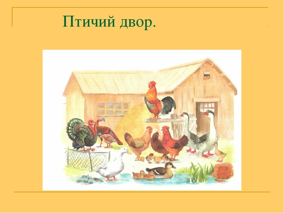 Птичьи двор картинки для детей