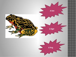 A lion A tiger A frog