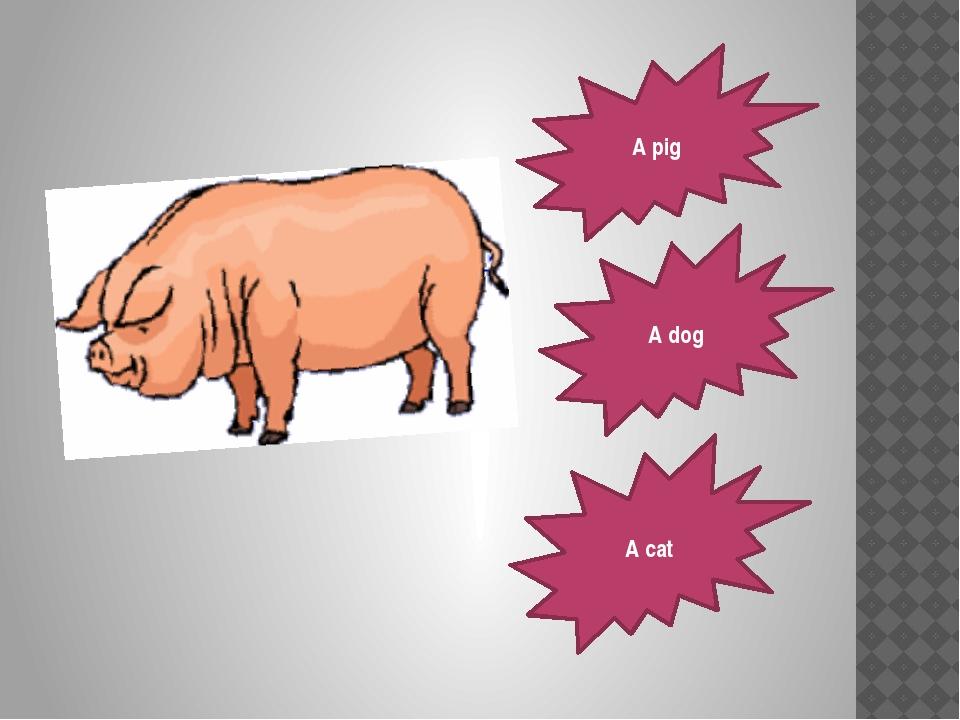 A pig A dog A cat