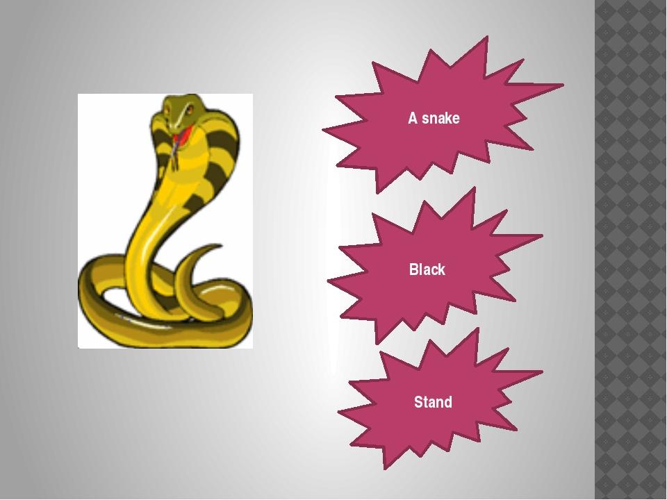 A snake Black Stand