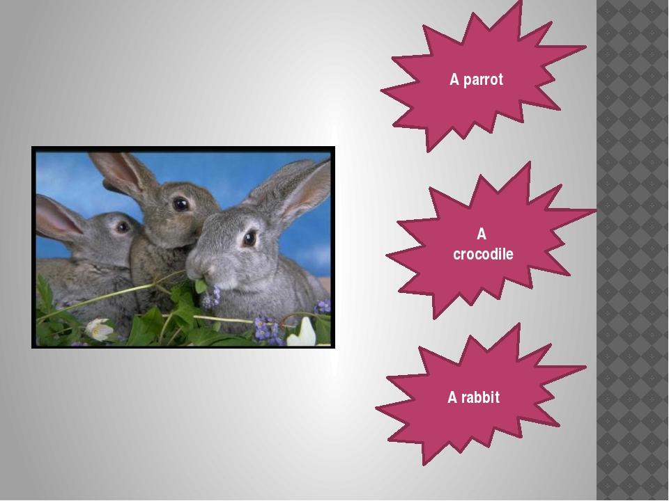 A parrot A crocodile A rabbit