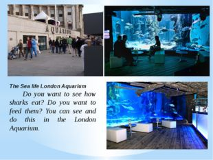 The Sea life London Aquarium Do you want to see how sharks eat? Do you want t