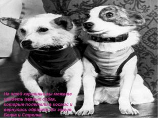 На этой картинке вы можете увидеть первых собак, которые полетели в космос и