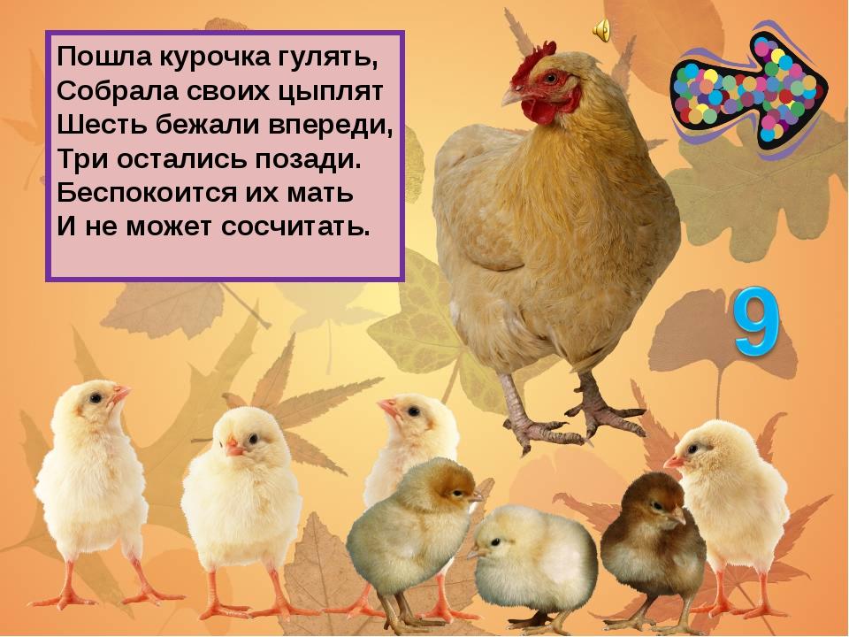 Пошла курочка гулять, Собрала своих цыплят Шесть бежали впереди, Три остались...