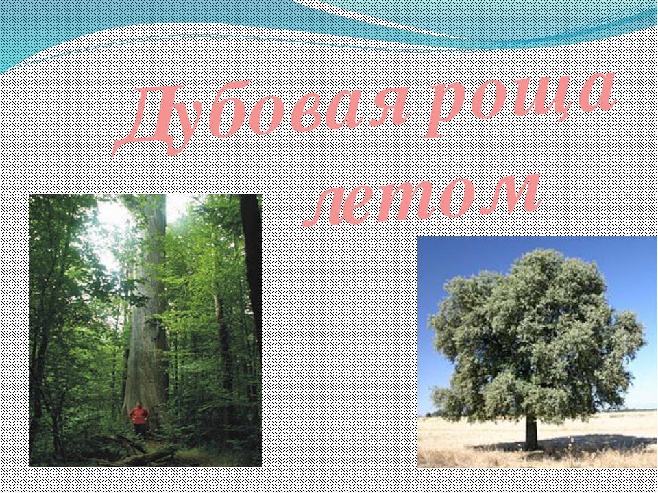 Дубовая роща летом
