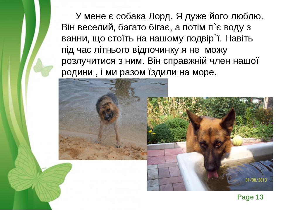 У мене є собака Лорд. Я дуже його люблю. Він веселий, багато бігає, а потім...