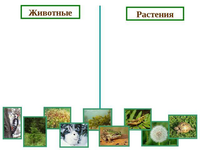 Животные Растения