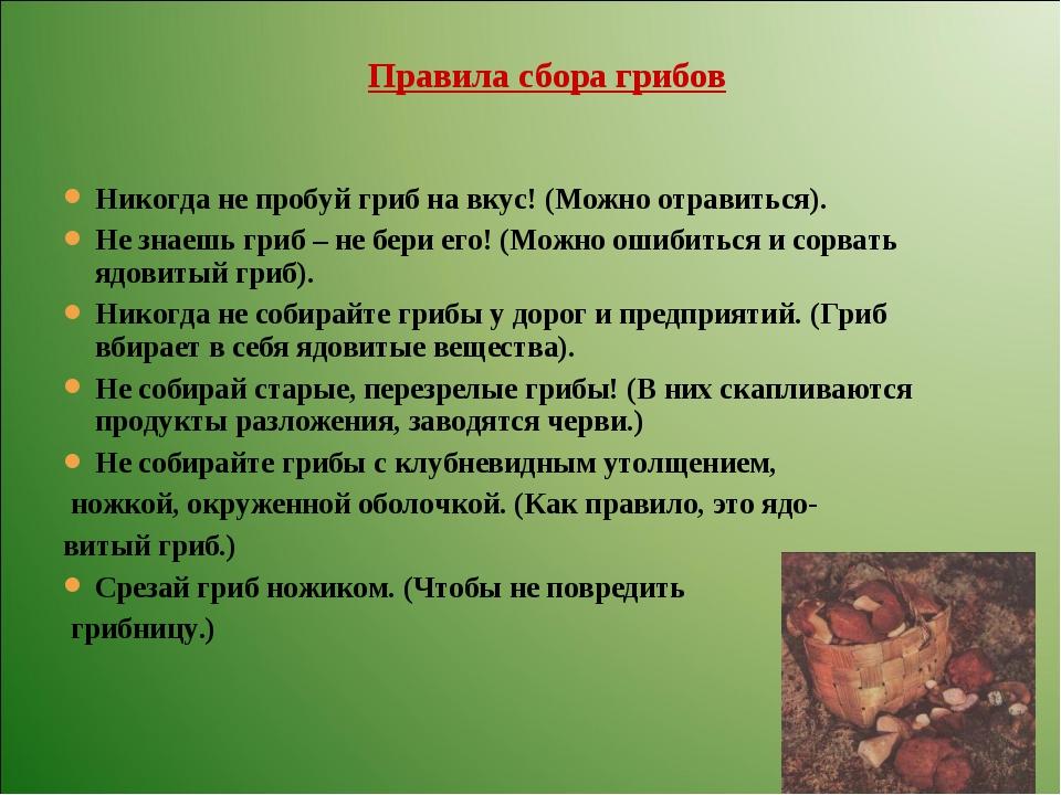 Никогда не пробуй гриб на вкус! (Можно отравиться). Не знаешь гриб – не бери...