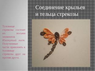 Соединение крыльев и тельца стрекозы Туловище стрекозы состоит их восьми элем