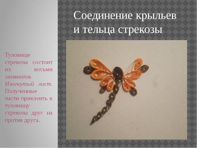 Соединение крыльев и тельца стрекозы Туловище стрекозы состоит их восьми элем...