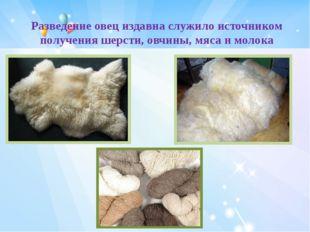 Разведение овец издавна служило источником получения шерсти,овчины, мяса и м