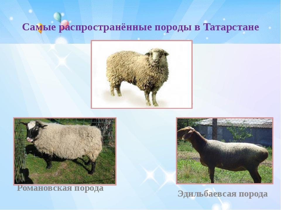 Самые распространённые породы в Татарстане Куйбышевская порода Романовская по...