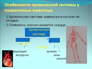 1.Кровеносная система замкнутая и состоит из сосудов. 2.Появилось хорошо разв