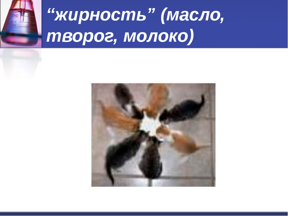 """""""жирность"""" (масло, творог, молоко)"""