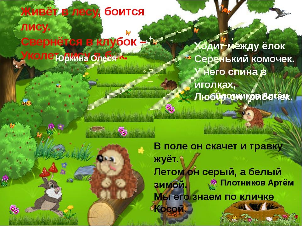 Живёт в лесу, боится лису. Свернётся в клубок – Уколет лису в бок. Юркина Оле...